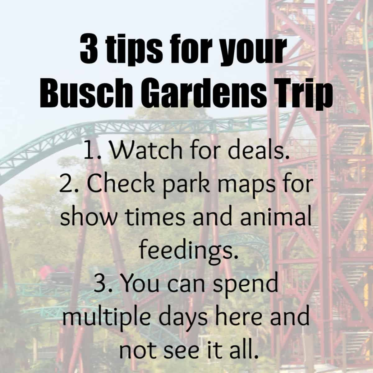 3 Tips for Your Busch Gardens Trip