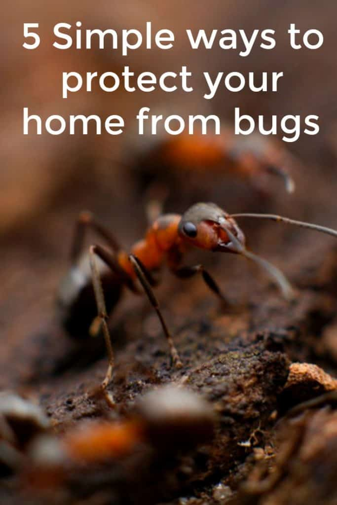 5 Simple ways to protect your home from bugs