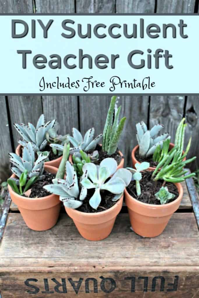 With Teacher Appreciation Week and Mother's Day coming up I decided to work on a fun gift idea with my daughter. I hope you enjoy this diy succulent teacher gift. This easy diy teacher gift idea would also work perfectly as a diy mother's day gift. #DIY #TeacherGift