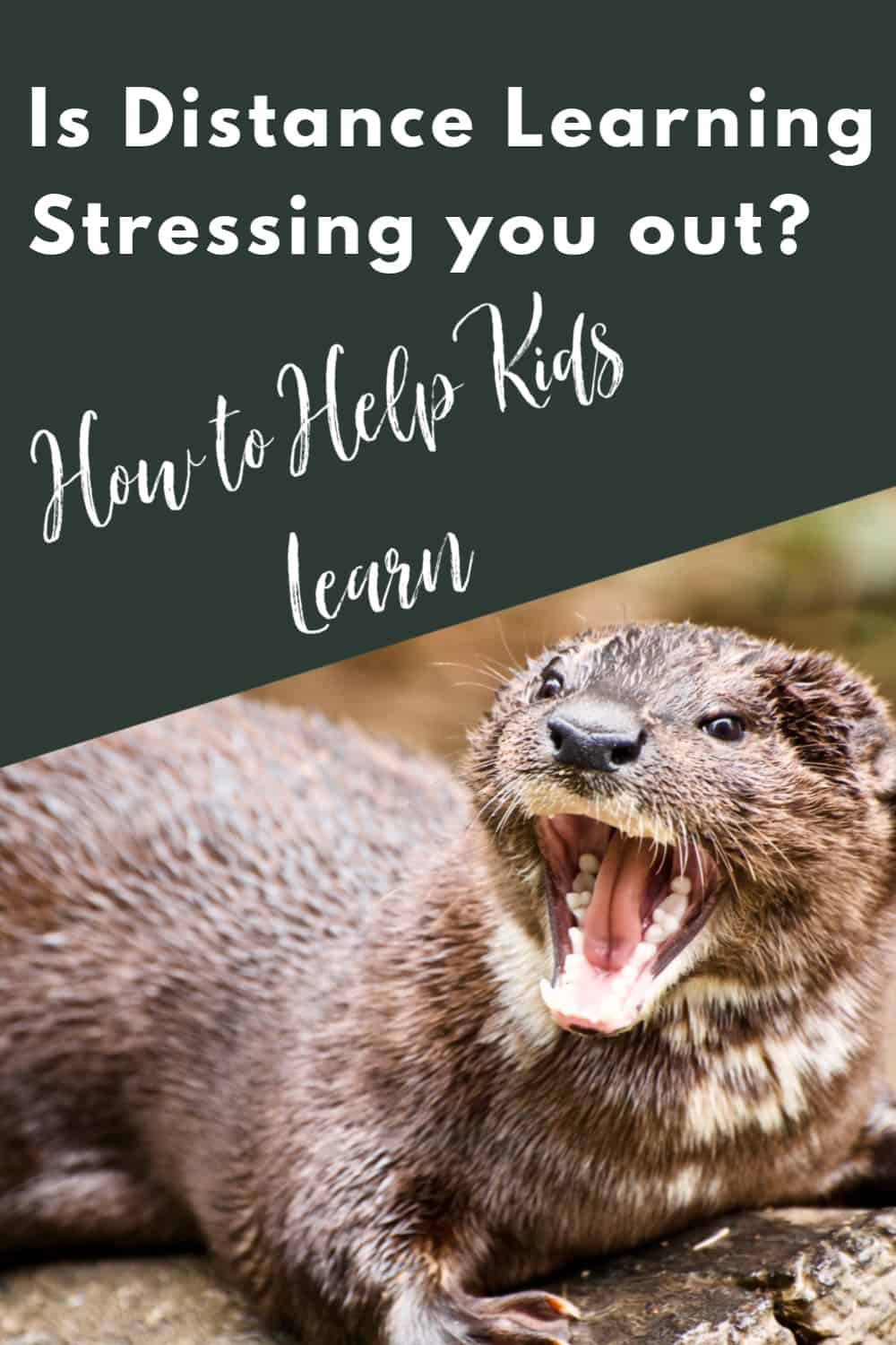 How to Help Kids Learn - Don't let distance learning stress you out with these simple tips to help kids learn.