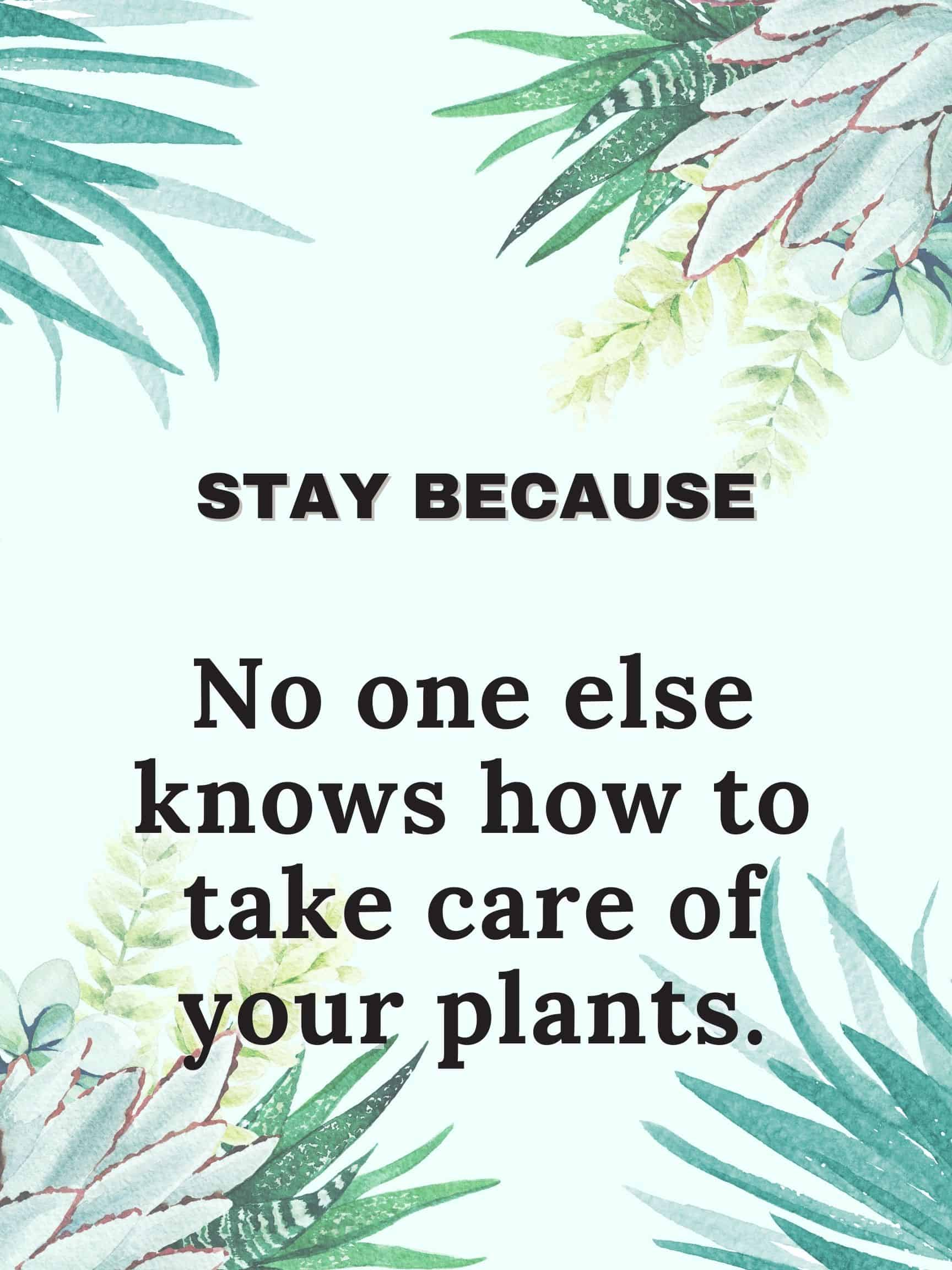 Stay because no one else knows how to take care of your plants. #staybecause